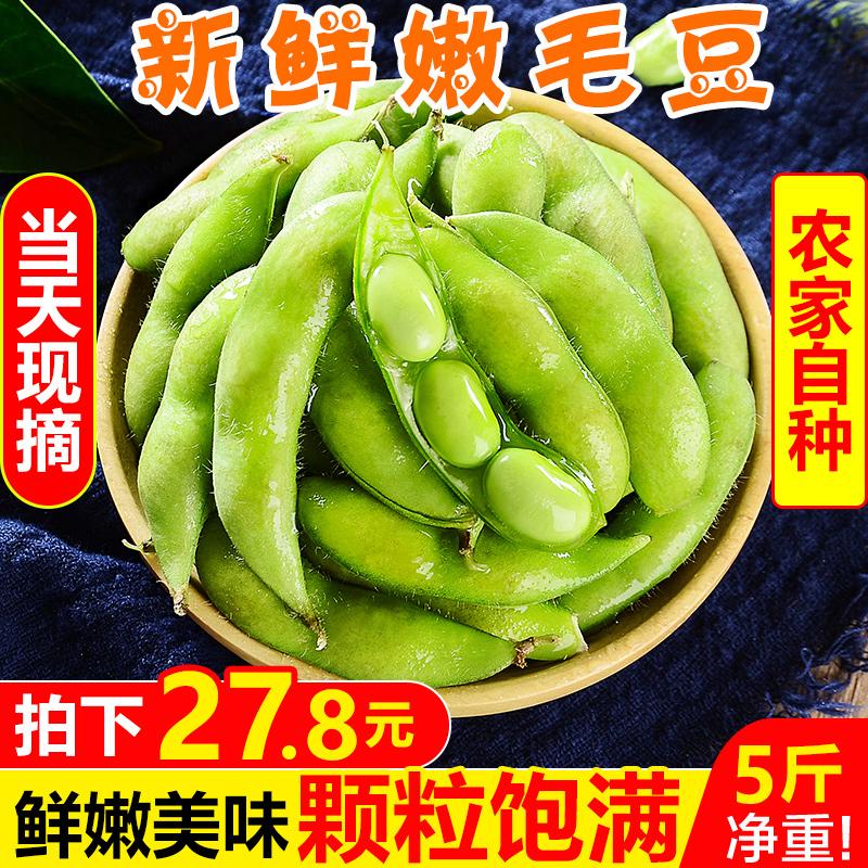 新鲜嫩毛豆5斤农家自种带壳生毛豆角现摘青大豆当季蔬菜整箱包邮
