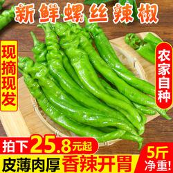 新鲜螺丝辣椒5斤现摘应季蔬菜农家青皮椒菜椒长辣子米椒特产包邮