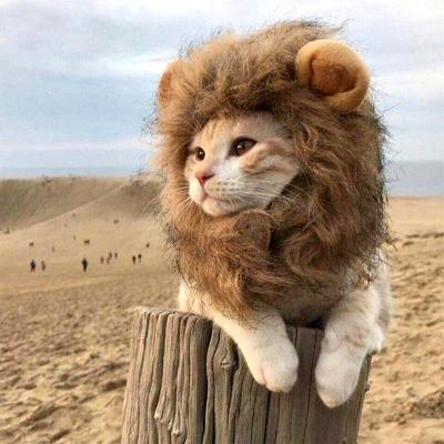 猫咪狮子头套猫帽子可爱搞怪宠物拍照道具小狗狗装扮服饰装饰品