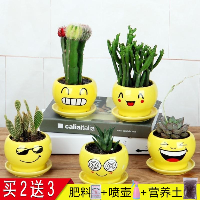 仙人掌盆栽办公室内开花桌面多肉植物绿植耐旱玻璃盆仙人球