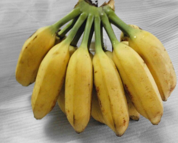 9斤大芭蕉水果香蕉新鲜banana青蕉发货非小香蕉皇帝蕉海南米蕉