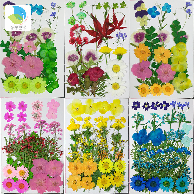 手工diy干花材料包 脸部装饰贴脸滴胶押花书签手机壳压花植物标本