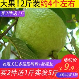 廣西現摘芭樂2斤當季番石榴水果批發特價包郵5熱帶水果清脆清甜10圖片