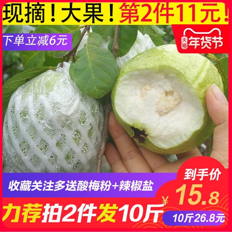 广西现摘白心芭乐番石榴5斤 新鲜热带当季水果低糖 脆甜香糯 包邮