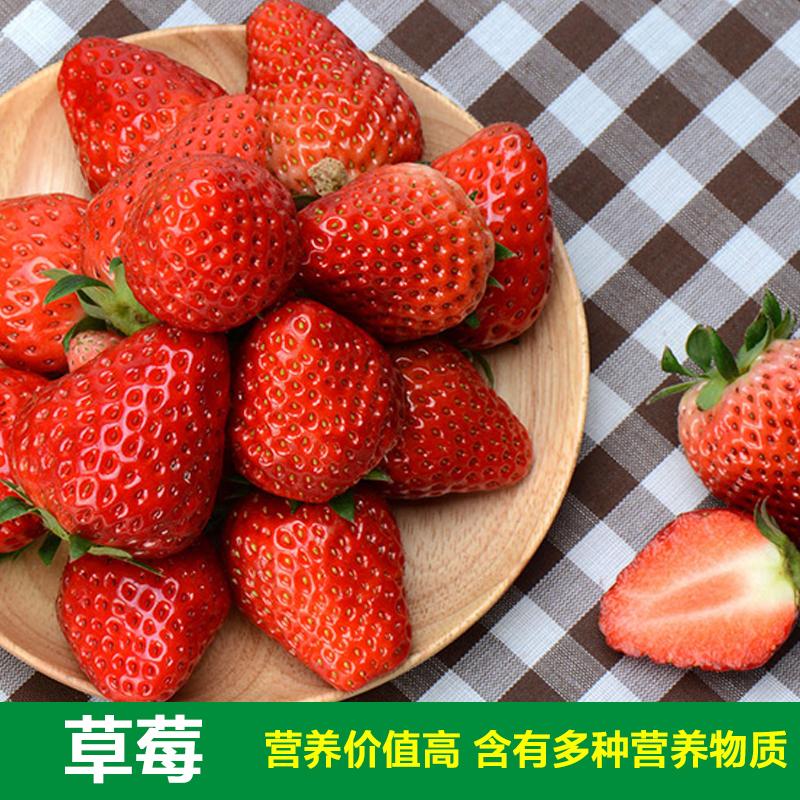 四季播矮生盆栽番茄种子草莓红黑紫菜种苗樱桃小西红柿圣女果