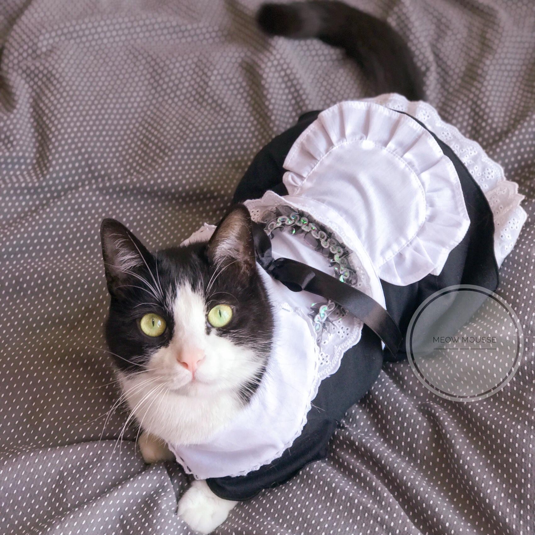 Meow mousse Kojima pet clothes cat clothes transfiguration dress dress dress cat dog clothes net red Maid Dress