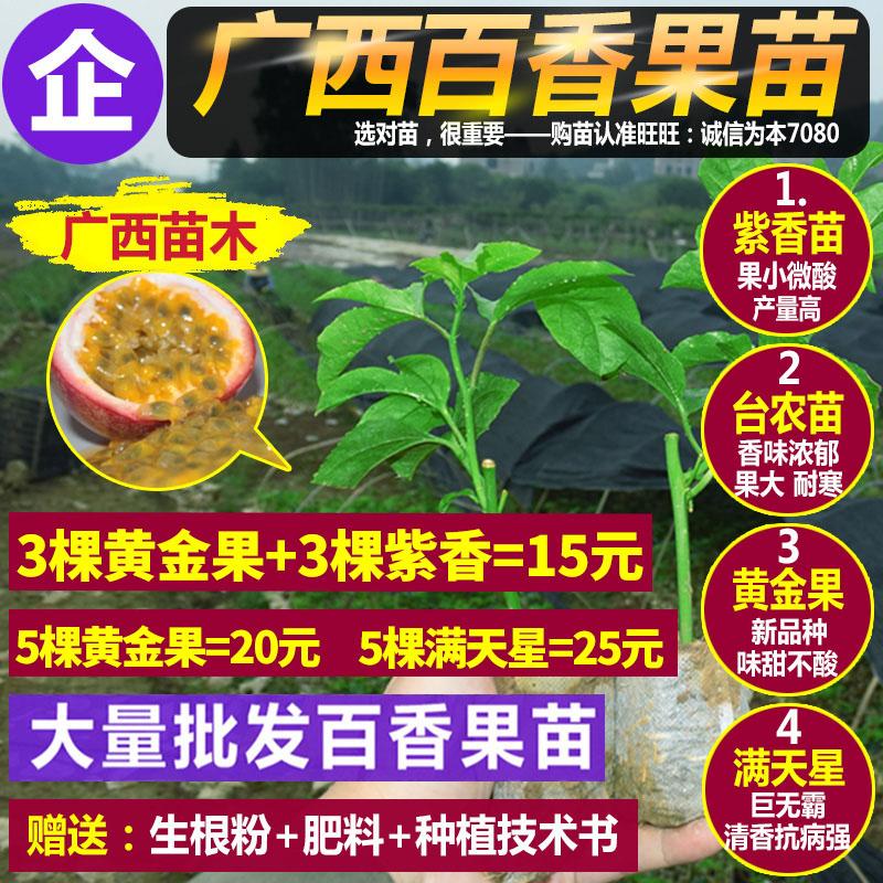 百香果苗西番莲苗树苗紫香一号黄金果台农满天星盆栽地栽当年结果