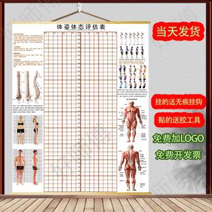 体态评估图健身房体测评估表瑜伽私教站姿形体脊椎修复身体评估图图片