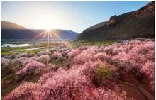 西藏林芝/旅游攻略旅游指南/交通景点路线行程住宿美食娱乐购物