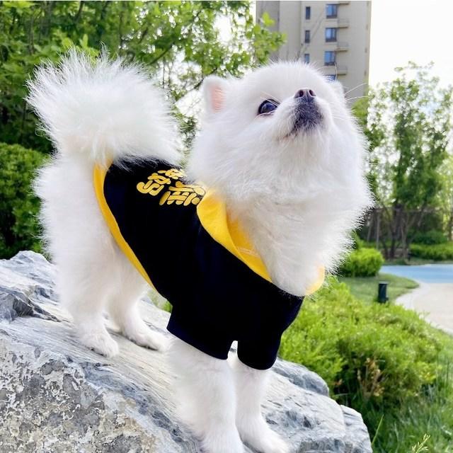 小狗狗衣服春夏季透气薄款背心小中型犬泰迪比熊博美宠物帽衫潮牌