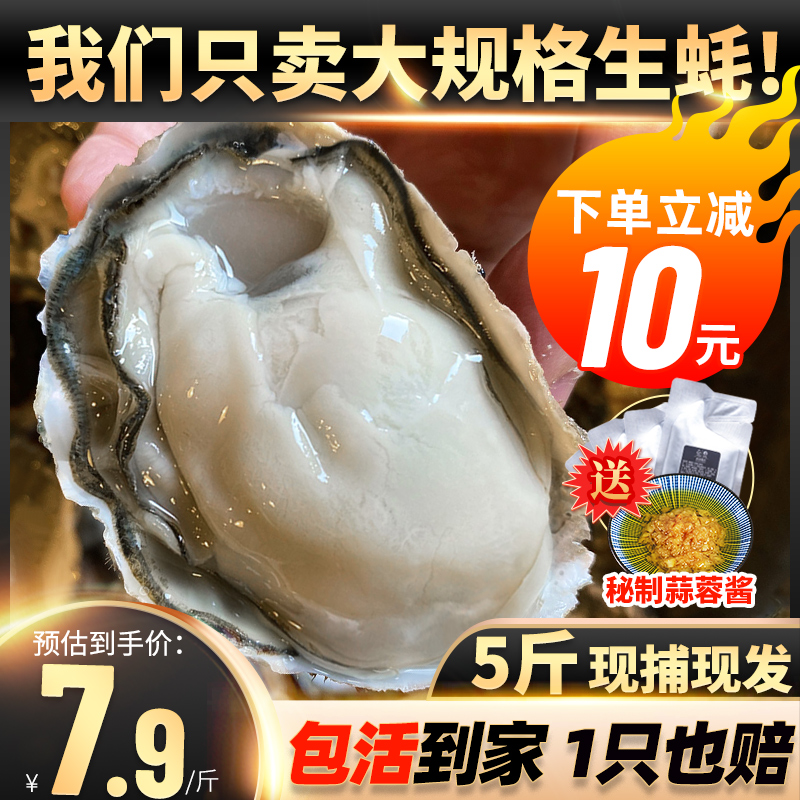乳山生蚝鲜活5斤海鲜水产特大牡蛎海蛎子新鲜超大大贝壳带壳10斤