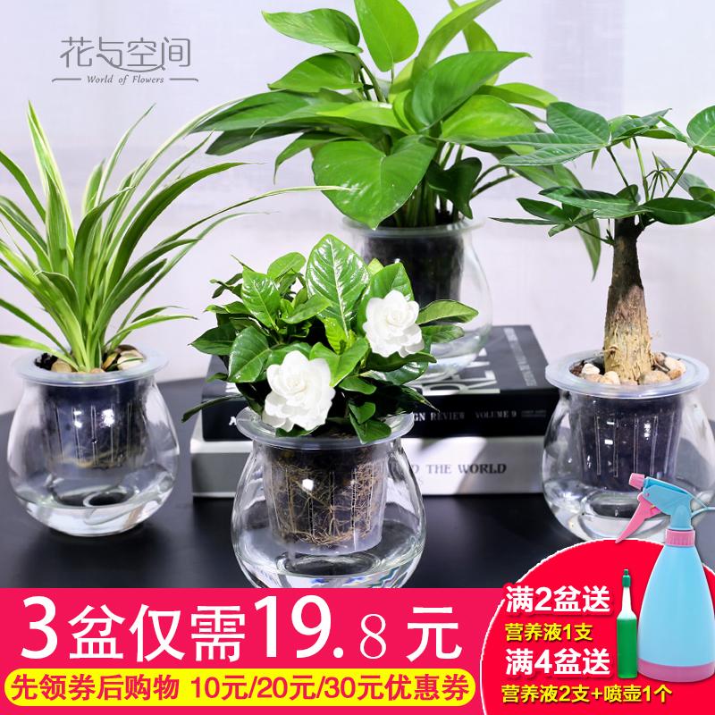 绿萝栀子花发财树常春藤文竹室内水培绿色小植物净化空气盆栽绿植