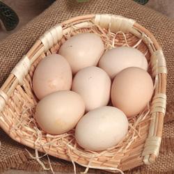 正宗新鲜散养土鸡蛋农家散养自养天然农村笨鸡蛋草鸡蛋柴鸡蛋10枚