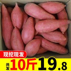 现挖带箱10斤番薯糖心红薯新鲜桂林山水农家红心蜜薯地瓜香甜批发