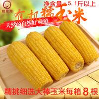 鴜鹭湖玉米黄糯玉米有机玉米东北粘玉米新鲜苞米棒真空玉米2.5kg