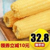 10支裝 開口樂玉米新鮮東北甜糯玉米棒粘牙黏玉米黃白玉米真空包裝