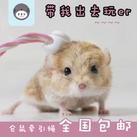 仓鼠牵引绳遛鼠金丝熊松鼠兔子荷兰猪豚鼠土拨鼠外带出牵引绳包邮图片