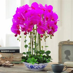 蝴蝶兰仿真花套装家居客厅茶几装饰花卉摆件假花绢花花艺摆设盆栽