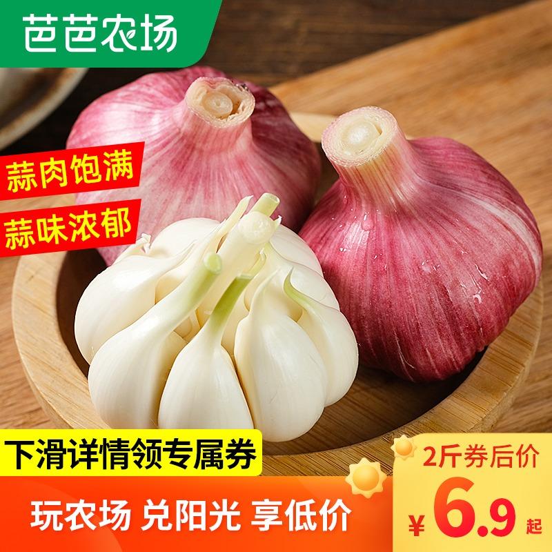 云南紫皮多瓣大蒜头5斤农家10独蒜