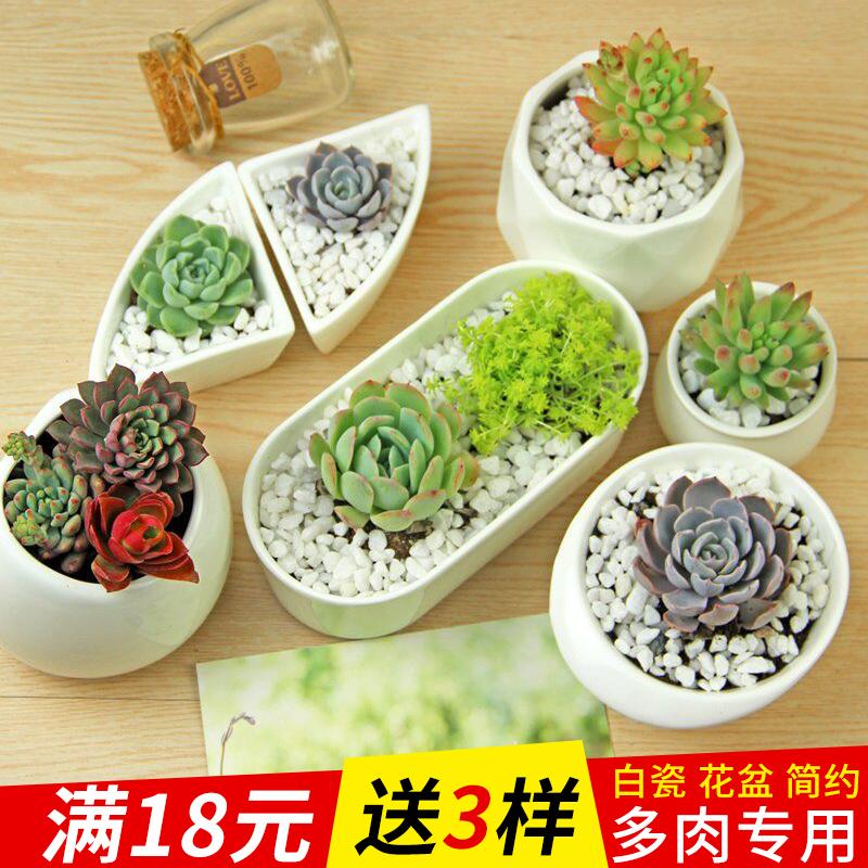 多肉花盆白色陶瓷盆长方形肉肉植物简约白瓷多肉盆小绿植花卉盆器