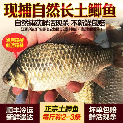 淡水鱼新鲜野鲫鱼约500g鲜活体现杀 土鲫鱼孕妇煲汤营养水产顺丰