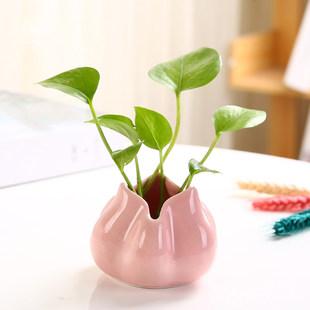 创意绿萝水培花瓶器皿鲜花插花瓶子水养植物花盆花器装饰客厅摆件