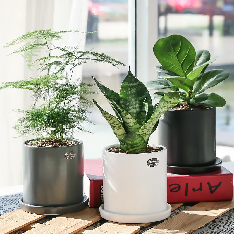 10月14日最新优惠盆栽植物室内龟背竹一帆风顺发财树