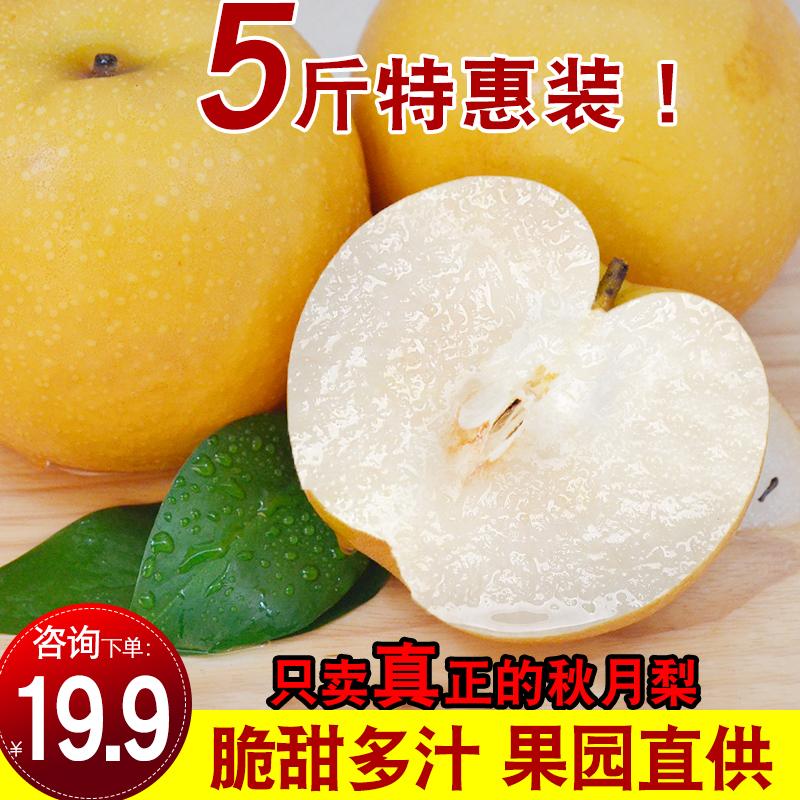 正宗莱阳秋月梨新鲜水果优质5斤包邮应季山东莱阳梨特产非丰水梨