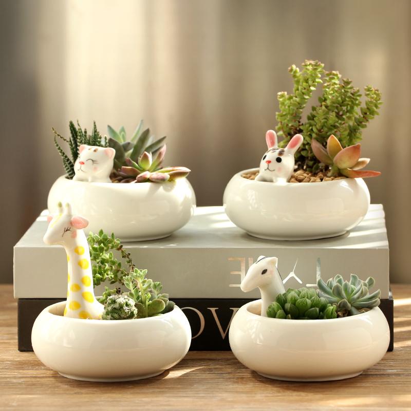 铂玉多肉花盆卡通室内桌面陶瓷花盆