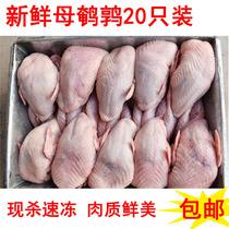 新鲜鹌鹑肉活体现杀冷冻白条母鹌鹑生骨肉油炸烧烤炖汤20只包邮