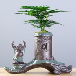 创意个性绿植文竹盆景植物家用办公室内盆栽陶瓷花盆客厅摆件装饰