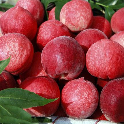 陕西新鲜水蜜桃子红桃血桃脆甜桃毛桃当季孕妇水果5斤非油桃蟠桃