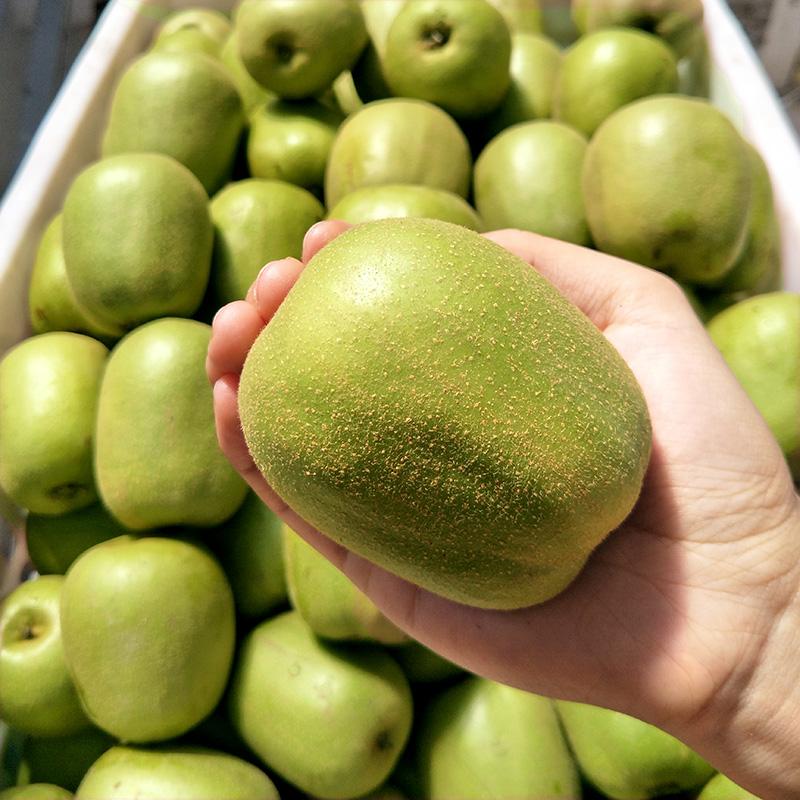 特级大果 蒲江红心猕猴桃新鲜5斤包邮 四川弥猴桃奇异果孕妇水果