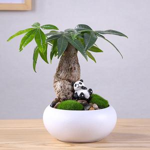发财树懒人创意盆栽植物桌面小盆景