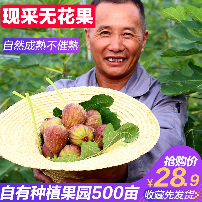 现货云南大新鲜红皮应季3斤无花果(用160.1元券)