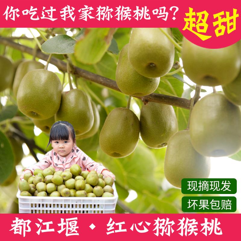 四川浦江都江堰红心猕猴桃特级新鲜水果5斤包邮 奇异果野生30个装