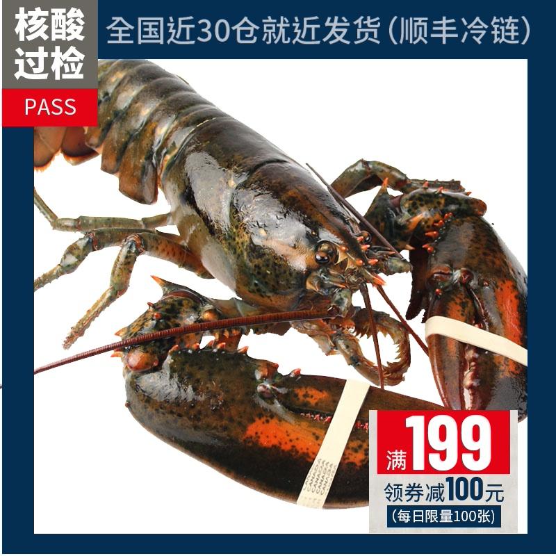 【味库】龙虾波士顿鲜活特大波龙奥龙波斯顿海鲜水产新鲜450-550g