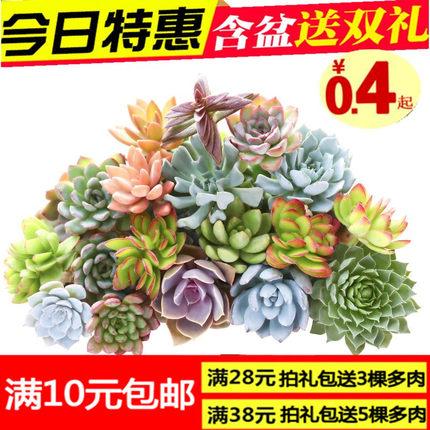 萌肉肉 多肉植物组合盆栽室内 虹之玉 多肉花卉绿植防辐射含盆