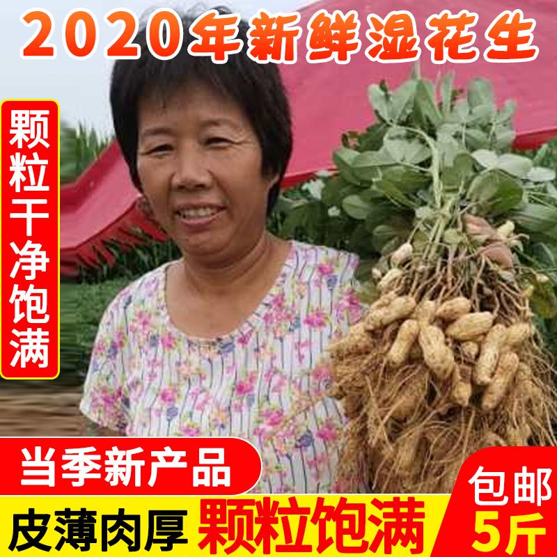 2020年新鲜湿现挖现发5斤生花生