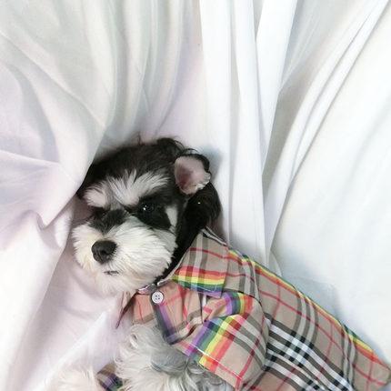 宠物猫咪狗狗衣服春秋泰迪格子衬衫