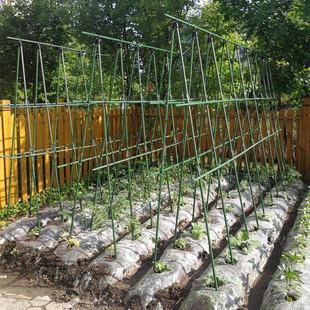 种菜架子豆角黄瓜爬藤架庭院葡萄架包塑钢管植物支架户外攀爬架子
