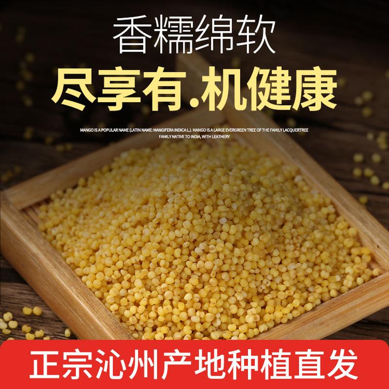 New millet Shanxi Wuxiang yangfeiqinzhou huangxiaomi in 2020