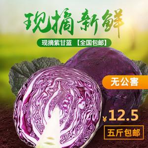 现割新鲜蔬菜沙拉有机紫椰菜紫甘蓝
