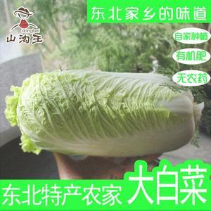 东北大白菜农家新鲜蔬菜大叶腌酸菜