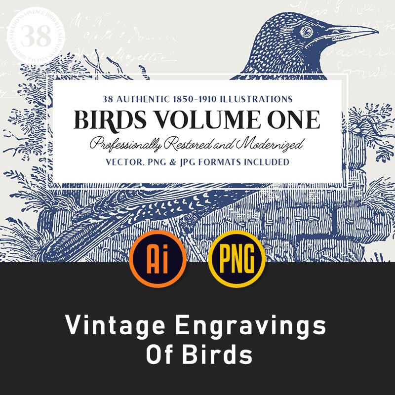 38个时尚复古鸟类手绘素描线条风格AI/EPS/PNG插画素材包集合L559