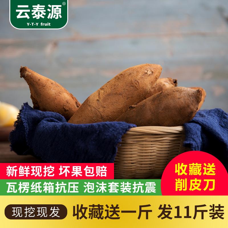 云南高原天山雪莲果黄心水果包邮红色泥现挖新鲜10斤现货特价促销