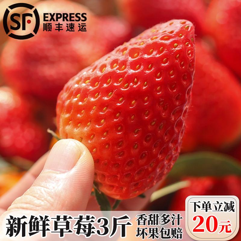 草莓新鲜现摘牛奶红颜非丹东99大草梅长丰奶油孕妇香甜礼盒鲜水果