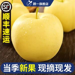 烟台黄元帅10斤新鲜当季黄香蕉整箱