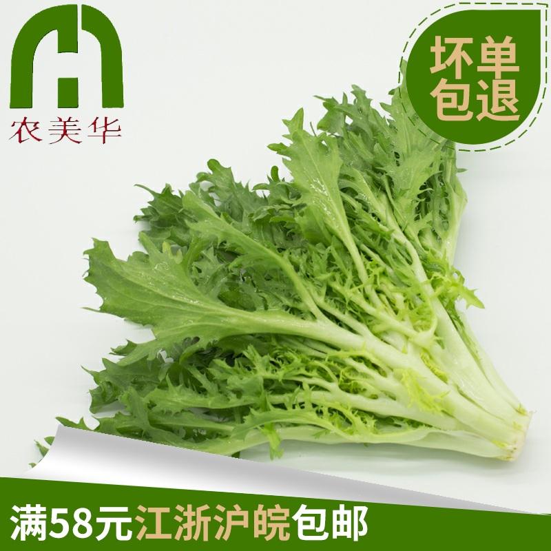 新鲜苦菊 苦叶 苦苣 苦菜 生菜 沙拉菜 250g