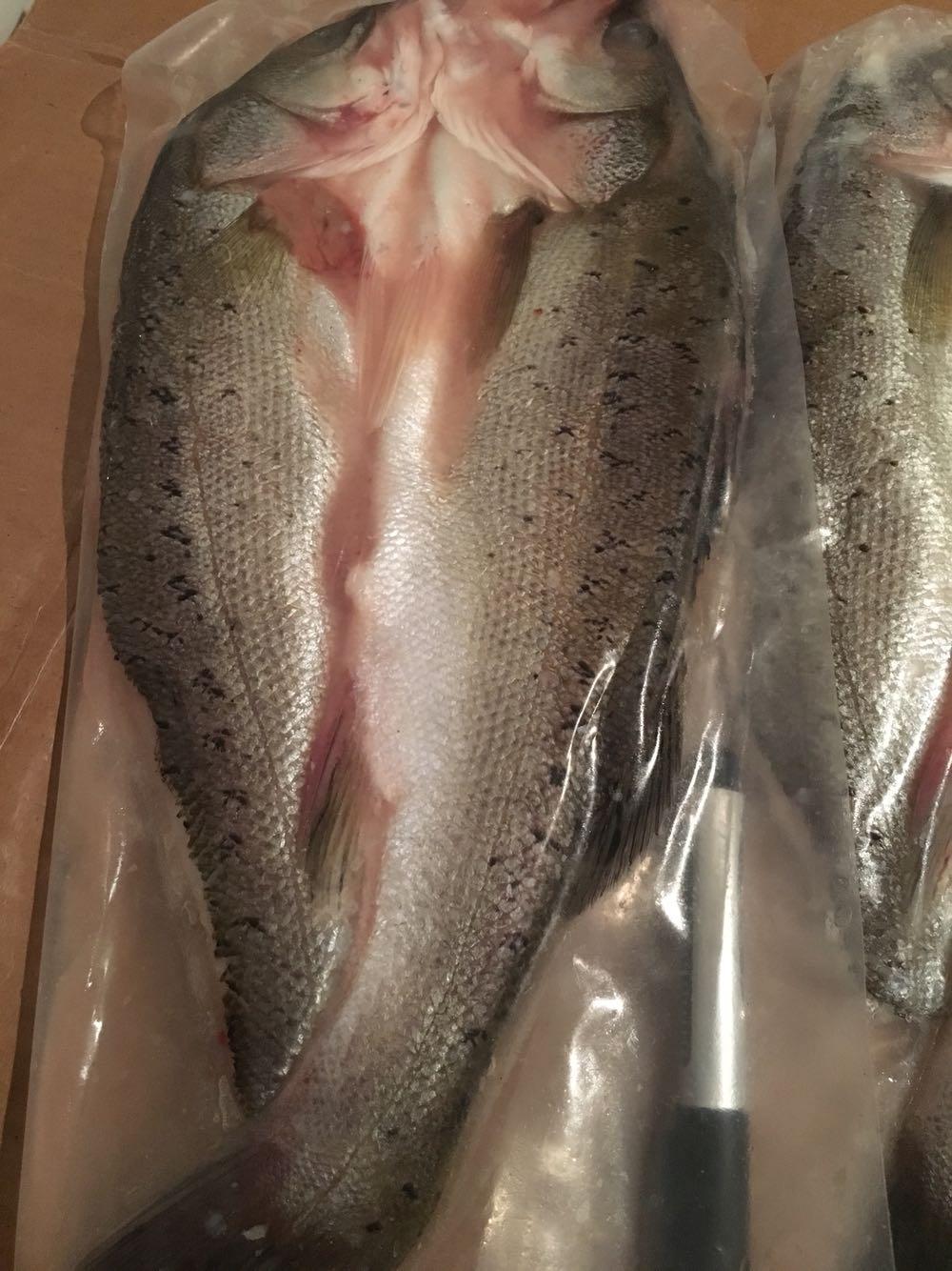 腌制海鲈鱼850g按条卖净重活鱼先杀烤鱼酒店江浙沪6条包邮